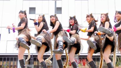 AnimalBeast 「旅するカンガルー」 アイドル ライブ Japanese girls Idol group [4K]